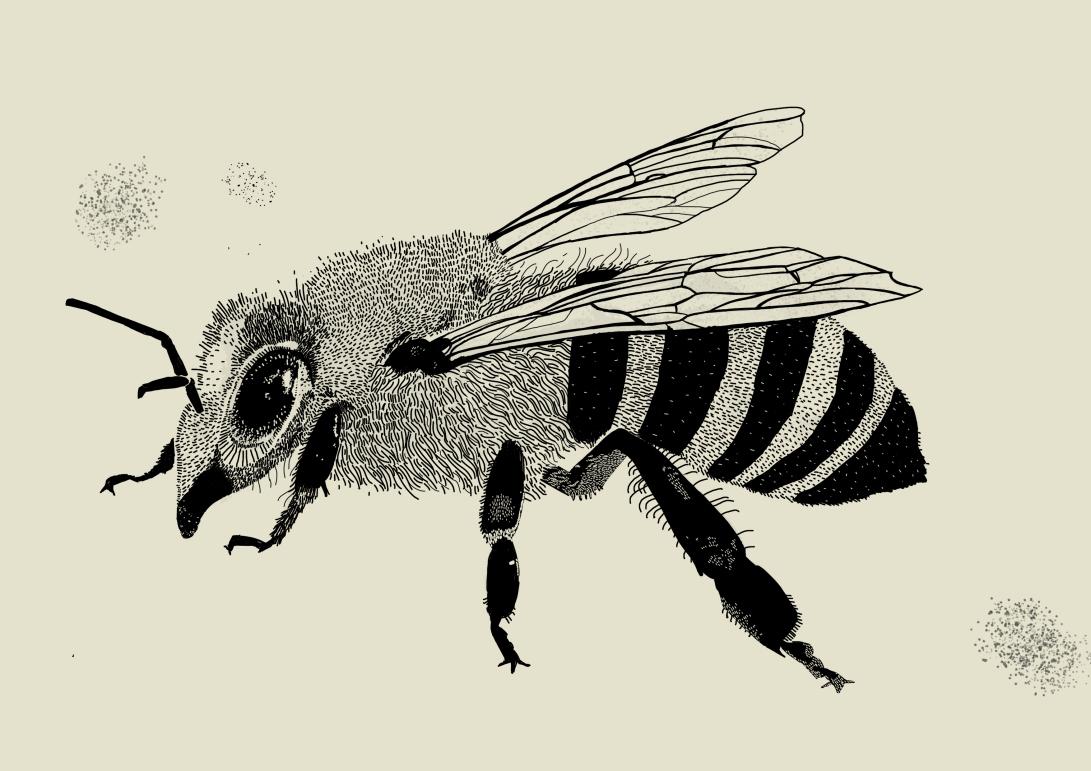 to print sketchy bee