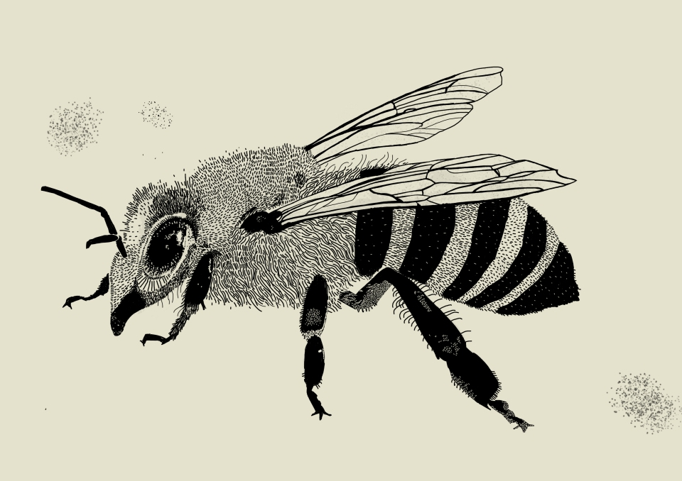 to print sketchy bee